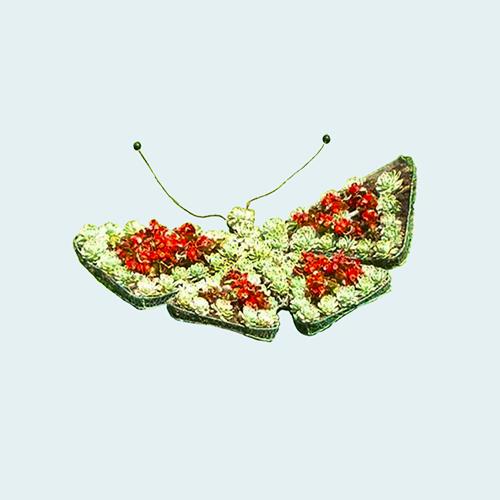 Цветочница бабочка